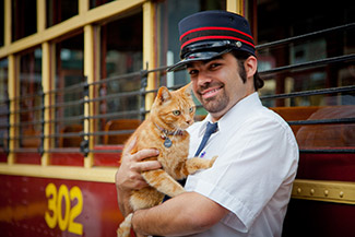 Birney the Bendigo Tramways Cat